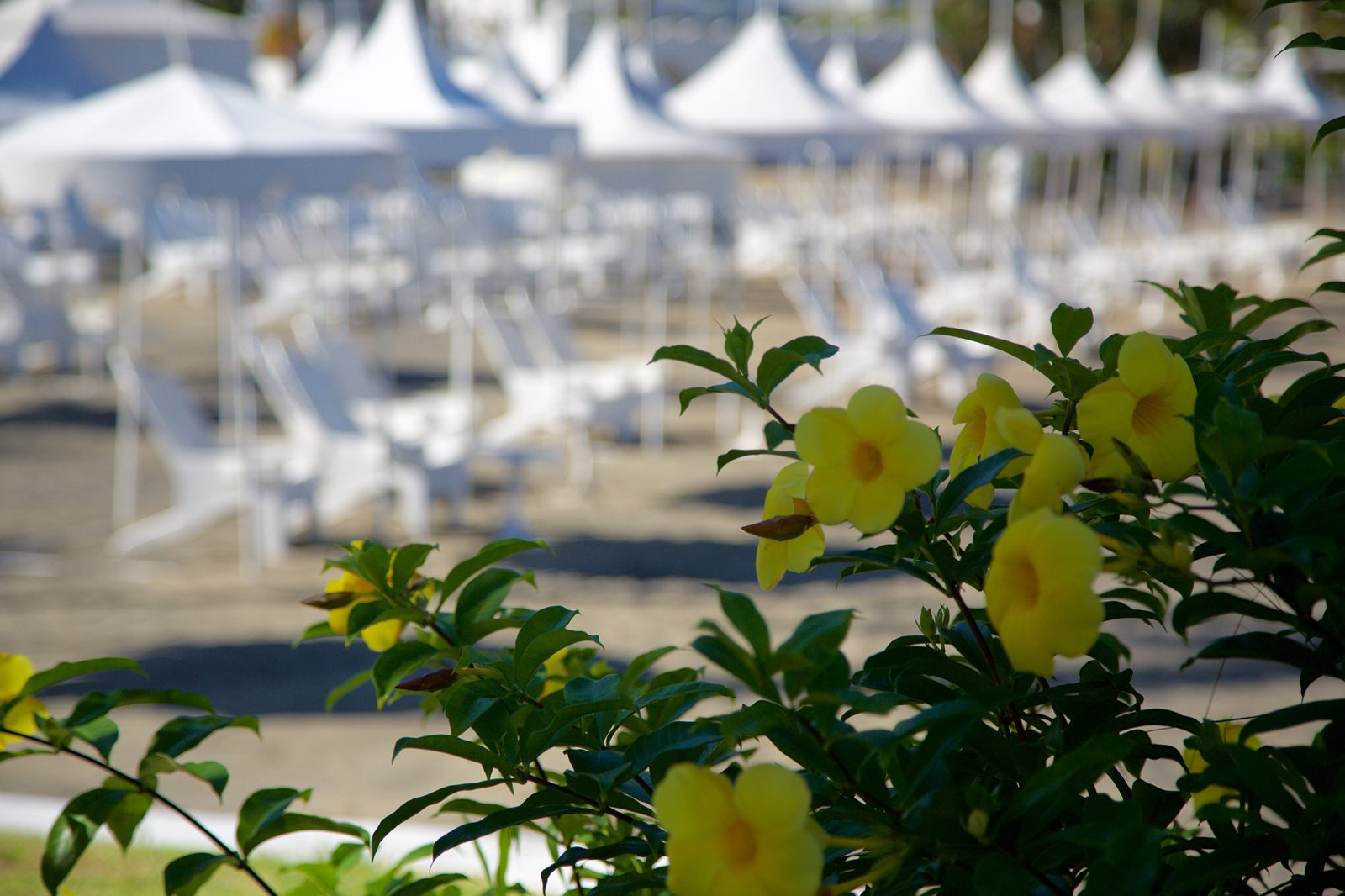 Flowers at Hotel Las Hadas by Brisas beach